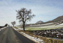 silnice lemují ovocné stromy