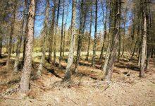 pak už vás čeká jen vysokohorský les