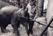 967, První krůčky po liberecké zoo