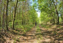 a lesních cestách