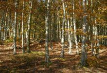 na podzim jsou zdejší lesy barevné a plné hub