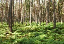 protože pak váš čeká jen hluboký les