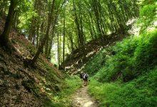 většina cesty vede typickými kokořínskými roklemi